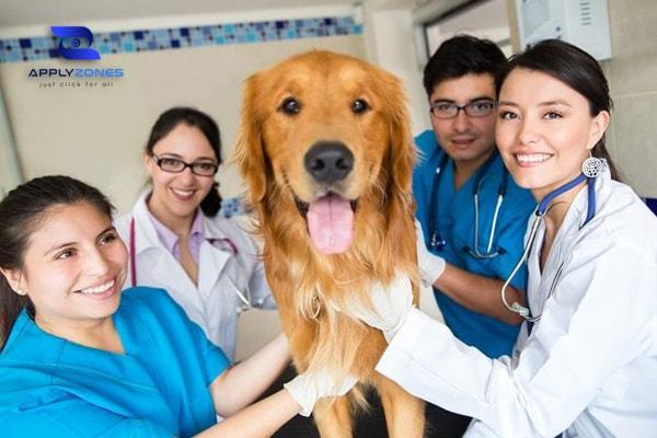 Điều kiện du học Úc ngành bác sĩ thú y